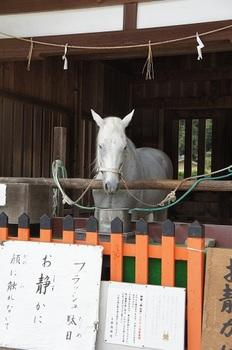 上賀茂神社 (1).JPG